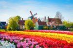 paisaje con tulipanes