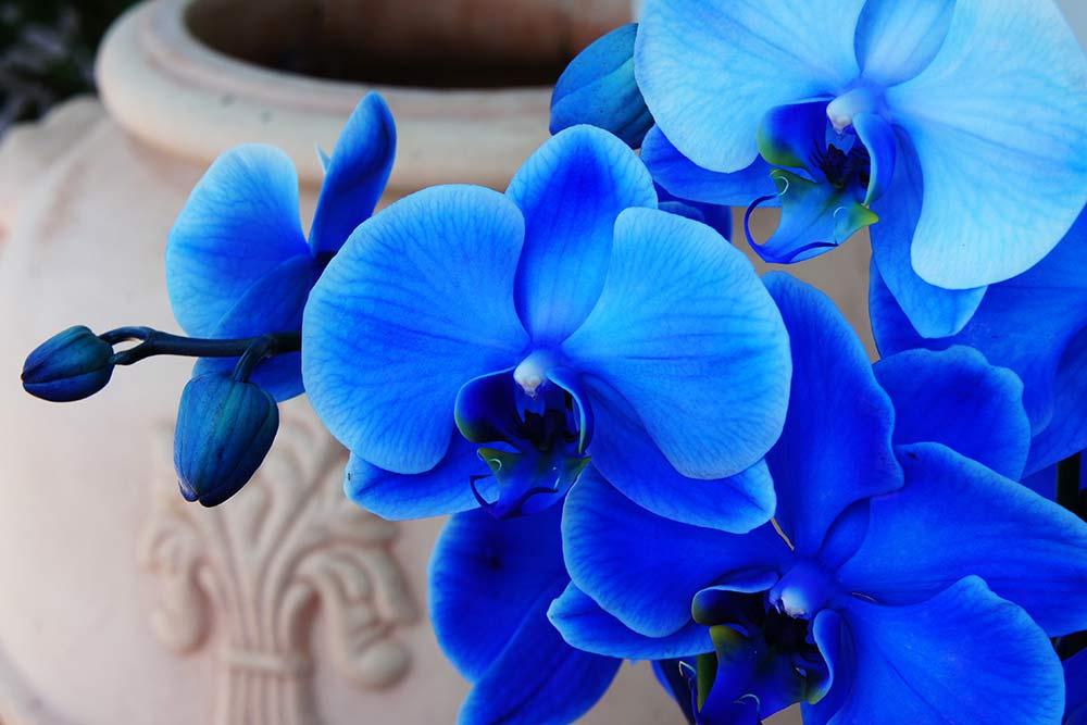 Orquidea Todo Sobre Estas Flores Tipos Cultivos Y Cuidados De Planta
